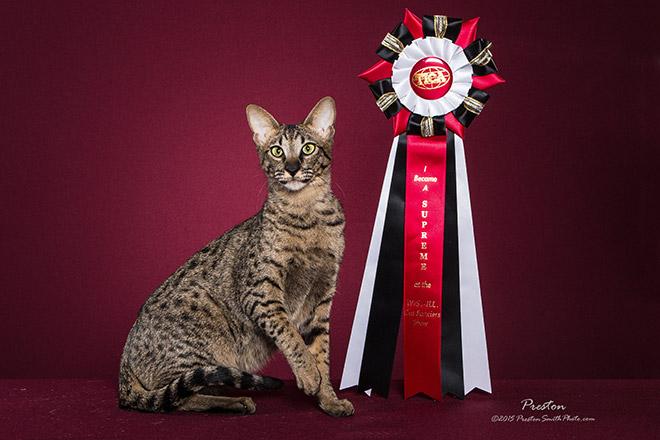 Monty with supreme ribbon
